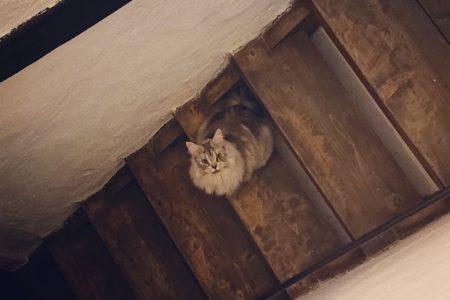お知らせ&看板猫